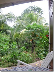 View from our room, flowers, fruit trees, butterflies, dragonflies & hummingbirds