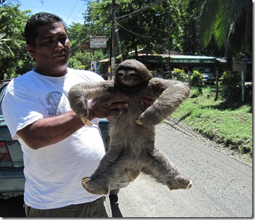 A sloth was trying to cross the street , this man stopped his car and helped the sloth across the street
