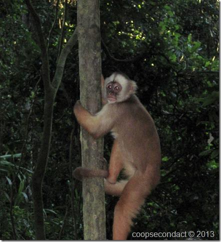 On Monkey Island