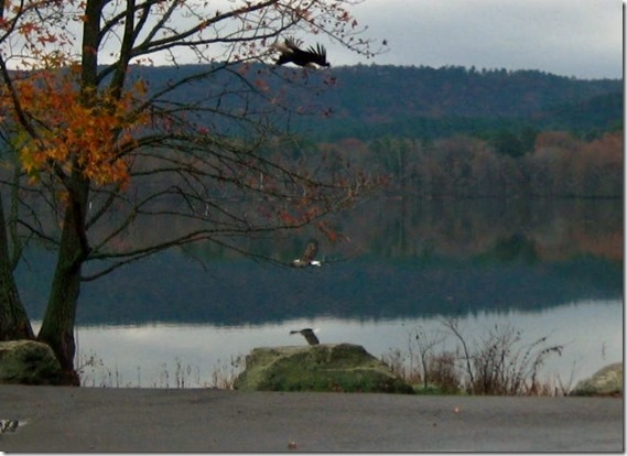 Cove Lake with Eagles