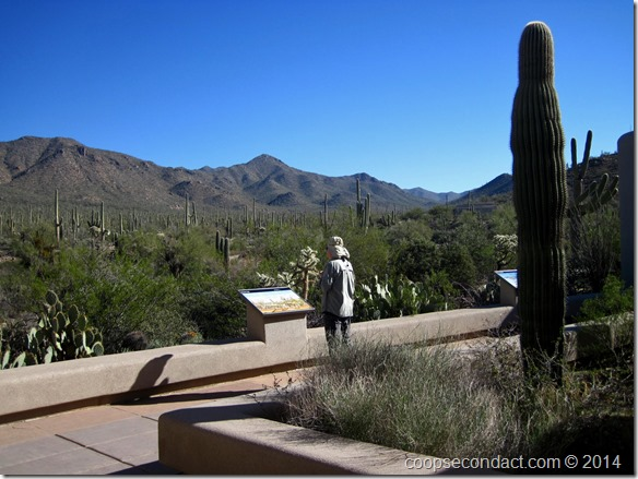 Saguaro National Park Visitor Center
