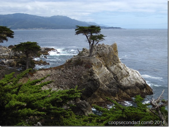 17 Mile Drive-The Lone Cypress