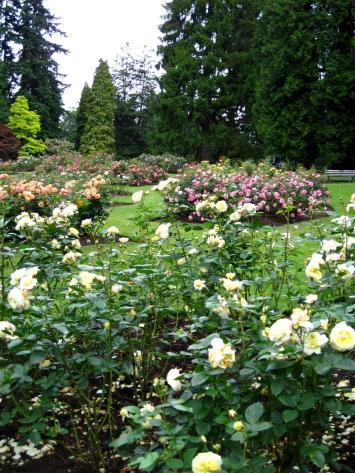 Stanley Park-Rose gargen