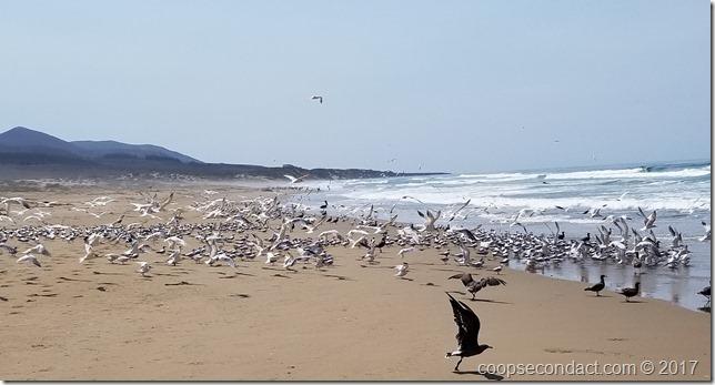 Cluster of birds