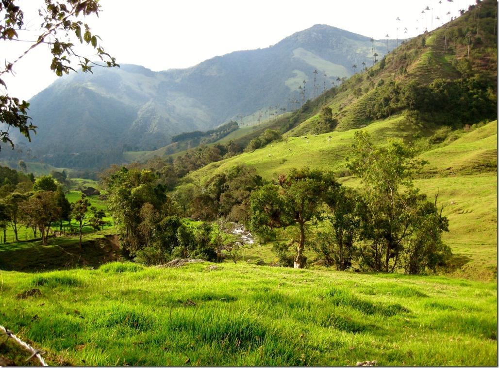 Valle de Cocora:  Near Salento, Zona Cafetera, Colombia